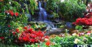 عکسی زیبا از طبیعت بکر