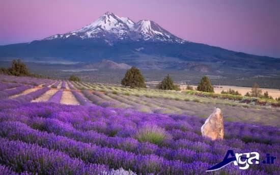 تصاویر زیبا از طبیعت بکر
