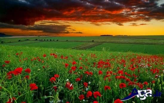 عکس های زیبا از طبیعت