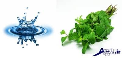 نعناع و آب درمانی موثر برای رشد مجدد موها