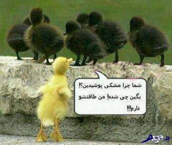عکس نوشته خنده دار جالب