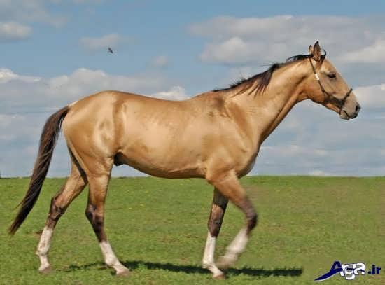 عکس های اسب زیبا