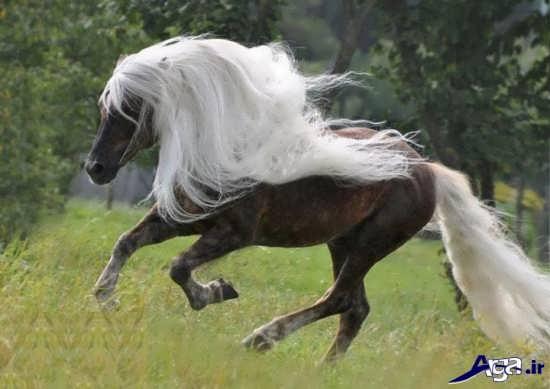 عکس اسب های زیبا