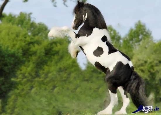اسب وحشی زیبا و دیدنی