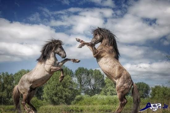 اسب های وحشی زیبا
