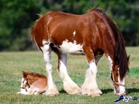 عکس زیبای اسب وحشی در طبیعت