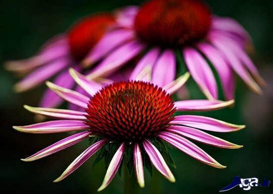 عکس زیبای گل طبیعی