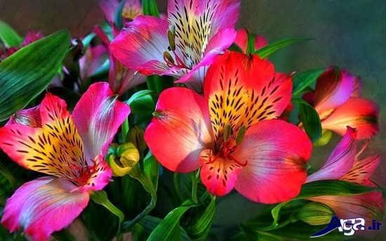 گل زیبا د رطبیعت