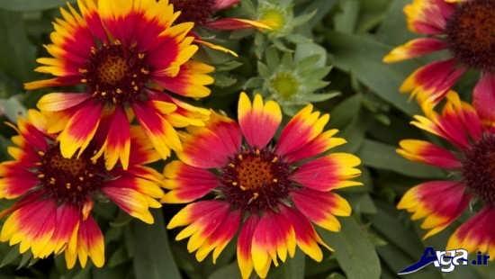 عکس گل خاص و زیبا