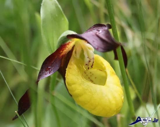 عکس های گل های طبیعی زیبا