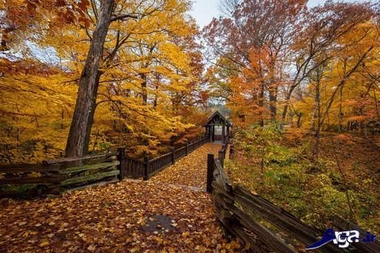عکس پاییز زیبا و دیدنی