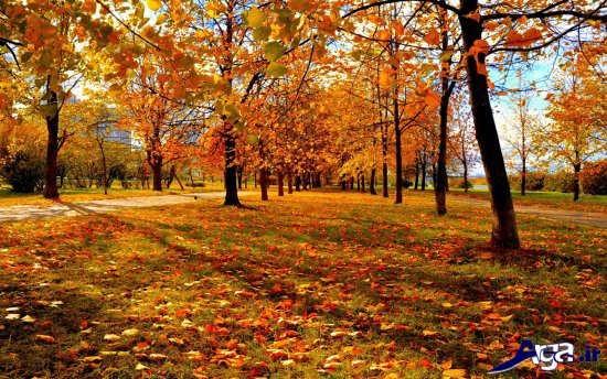 عکس های دیدنی پاییز