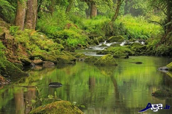 عکس های طبیعت زیبا و دیدنی