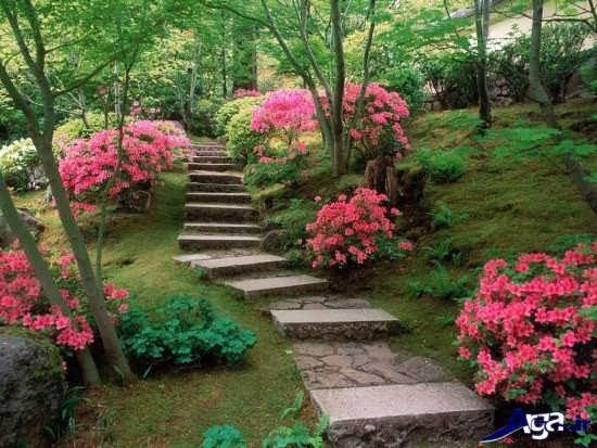 عکس زیبا و جذاب طبیعت