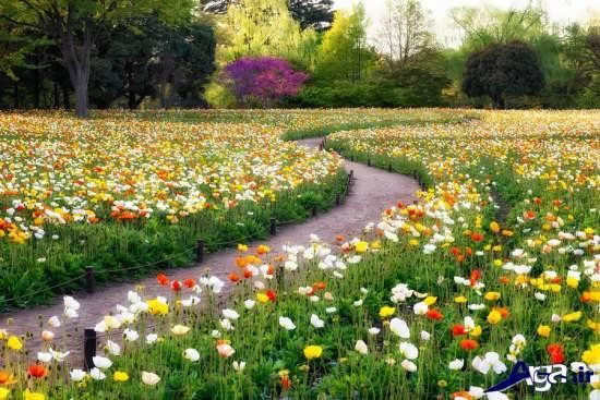 عکس های دیدنی گل های زیبای طبیعت