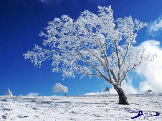 عکس زیبای زمستان