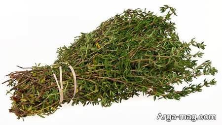 فواید گیاه کاکوتی و کاربرد دارویی آن
