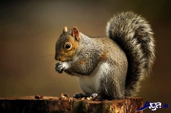 عکس های سنجاب زیبا