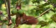 عکس های سنجاب های زیبا و دوست داشتنی