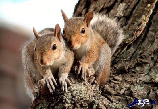 تصاویر سنجاب های بامزه