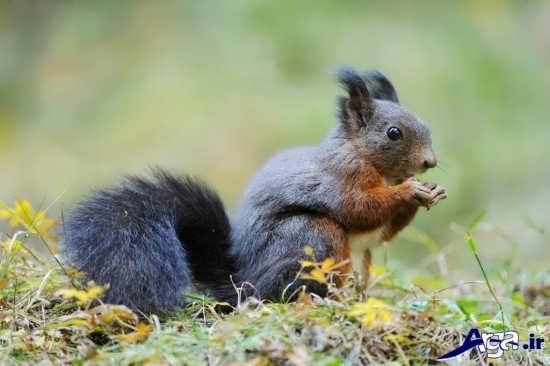 سنجاب های زیبا و بامزه