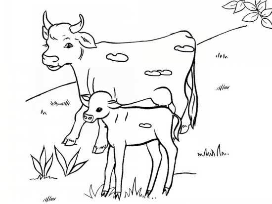 نقاشی گاو و بچه گاو