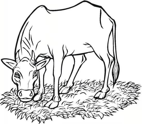 نقاشی گاو در حال خوردن علف