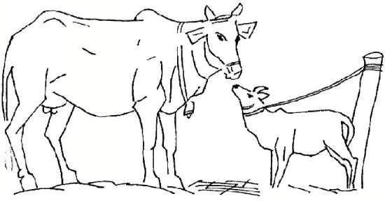 نقاشی گاو جالب