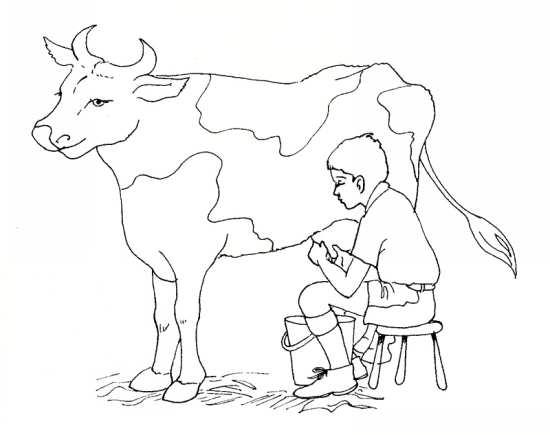 نقاشی های کودکانه گاو