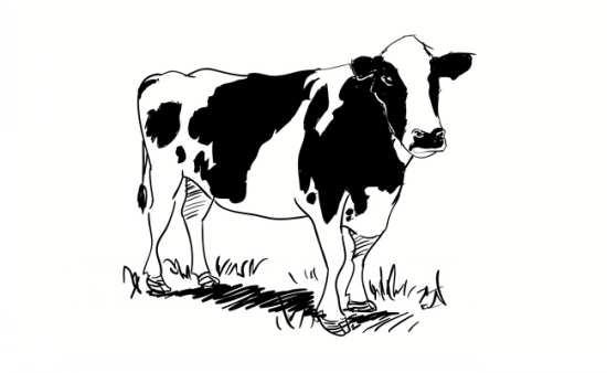 نقاشی های گاو در مزرعه