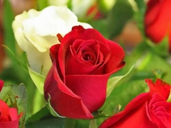 عکس گل برای پروفایل