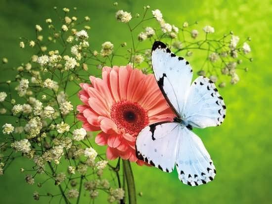 عکس گل زیبا و جدید