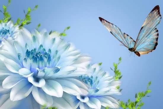 عکس گل رویایی برای پروفایل