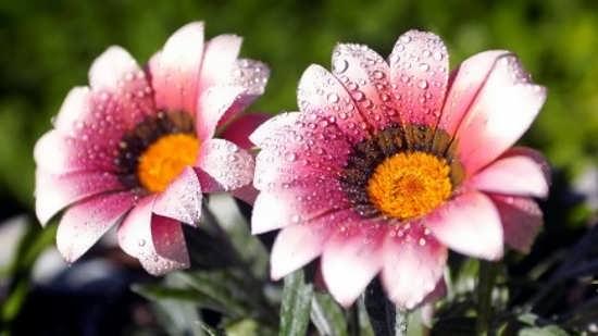 عکس گل جالب برای پروفایل