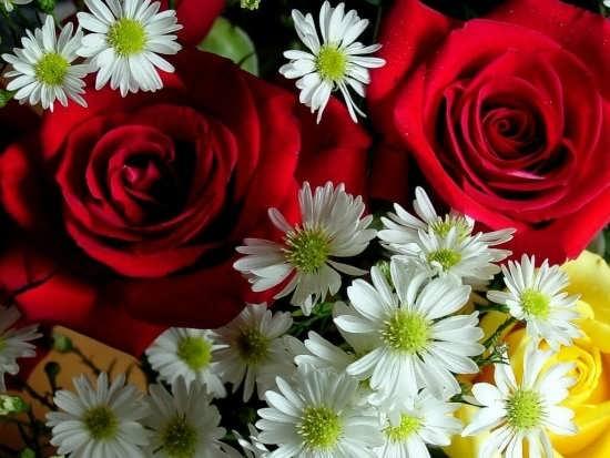عکس گل برای پروفایل تلگرام