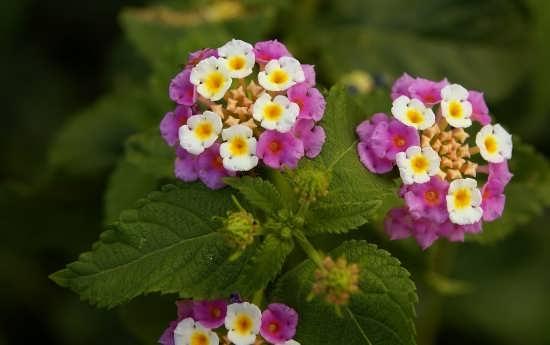 عکس گل جالب و زیبا