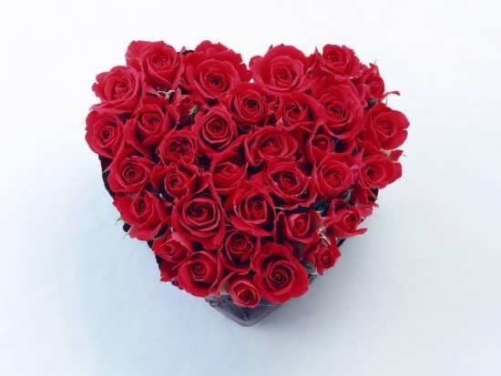 عکس گل های زیبا و رمانتیک