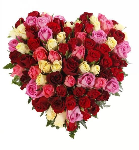 عکس گل برای پروفایل آدم های رمانتیک