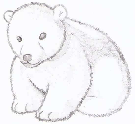 نقاشی از خرس قطبی زیبا