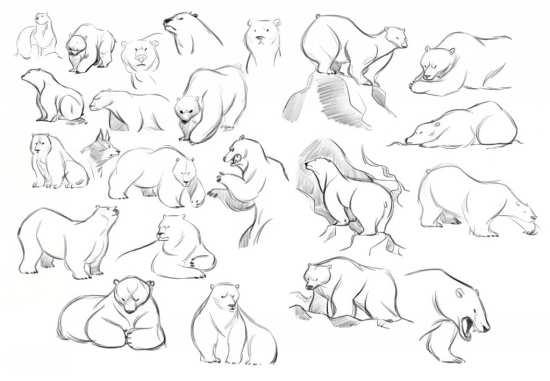 نقاشی انواع خرس ها
