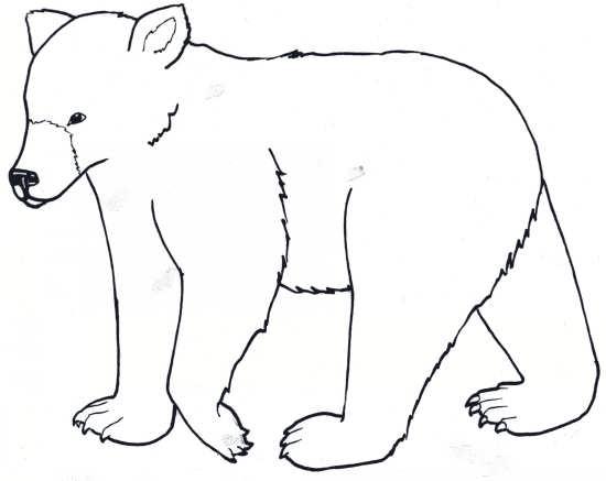 نقاشی خرس قطبی