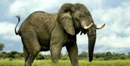 عکس فیل