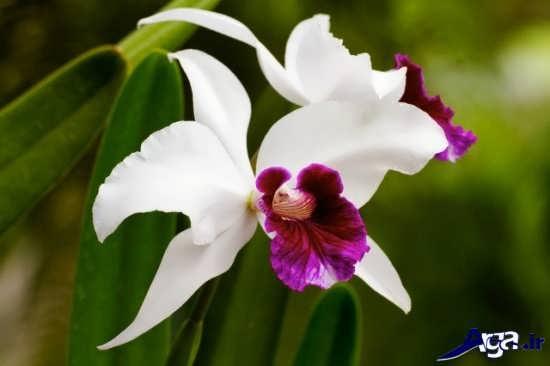 عکس گل ارکیده زیبا و خاص