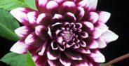 عکس گلهای سیار زیبا