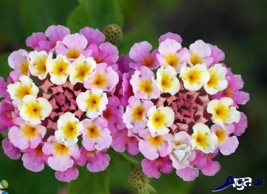 عکس زیباترین گل های طبیعت