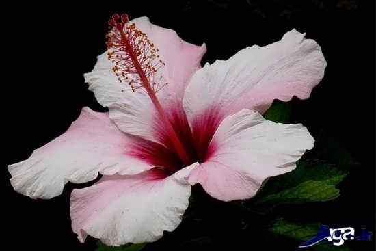 عکس گلهای زیبا و جذاب