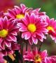 عکس گل برای پروفایل آدم های با احساس