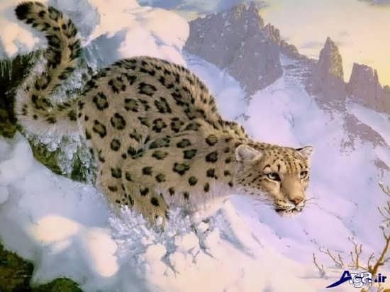 عکس سه بعدی حیوانات