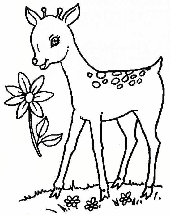 نقاشی آهو و انواع رنگ آمیزی آهو برای کودکان