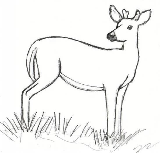 نقاشی آهو زیبا در دشت سرسبز